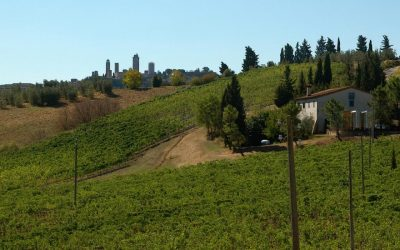 A chat with Azienda Agricola Tollena