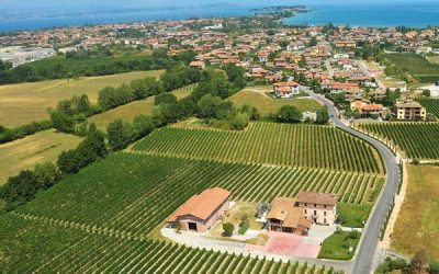 Azienda Agricola Sgreva: Garda Lake in a glass of wine